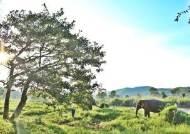 [week&] 코끼리와 같이 걸었다 … 뜨는 '착한 여행'