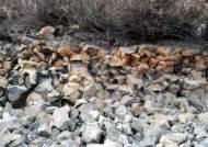 [단독]유네스코 지질공원 인증받는다며 한탄강 주상절리 파괴?