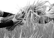 하루에 밥 '한 공기 반' 섭취 …도시락·햇반 등 가공식품 쌀 소비는 증가