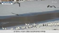 [단독]'두루미 낙원' 민통선 빙애여울 뒤덮은 두루미떼 '군무'