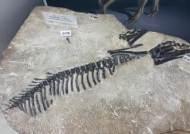 [굿모닝 내셔널] 화성에 공룡 산부인과? 지금까지 알 화석 200개 발견