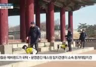'킁킁' 냄새 맡더니 전방주시…'흰개미 잡는' 탐지견의 활약상
