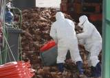 """세계 첫 H7N4형 AI 감염자 발생…""""중국 여행 조심하세요"""""""