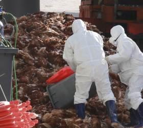 """세계 첫 H7N4형 <!HS>AI<!HE> 감염자 <!HS>발생<!HE>…""""중국 여행 조심하세요"""""""