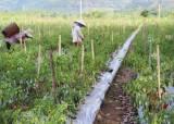 [비즈 프리즘] CJ가 베트남서 고추 농사 짓는 까닭은