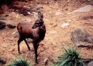 민통선서 분변 찾아 6개월 … 멸종위기 사향노루 6마리 발견