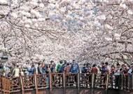 바야흐로 봄…꽃길 걷고 맛여행 즐길 곳은 어디?