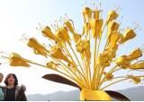 """[굿모닝 내셔널]""""물렀거라, 최강 한파""""…산수유 '황금빛 꽃잔치'"""