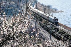 매화·벚꽃 흐드러지는 계절 … 경남 곳곳서 봄축제