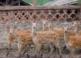 사라진 꽃사슴·사향노루…멸종위기 생물 20종 <!HS>복원<!HE>한다
