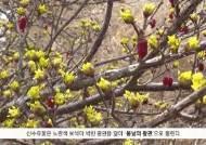 [굿모닝 내셔널] 꽃향기 따라 흐드러지는 남도의 봄