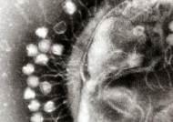 [강찬수의 에코파일] 항생제 내성균 잡는 '마법의 탄환'