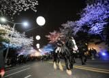 멀리 갈 필요 없네? 경기도서 이어지는 산수유꽃·벚꽃·철쭉축제