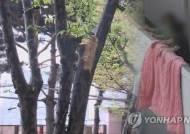 """""""이불 털다 떨어질 뻔"""" 재연하다 60대 여성 11층서 추락"""