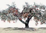 나무 사진 한 장 찍는 데 1000만원 … 1년을 기다립니다