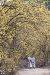 의성은 마늘과 <!HS>컬링<!HE>의 고향? 4월 주인공은 산수유꽃이었네
