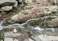 [영상]다시 '봄'…청량한 관악산 계곡물에서 춤추는 봄 꽃잎