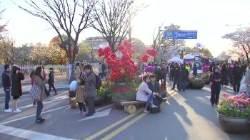 [서소문사진관]서울 벚꽃 명소 10선... 오늘 꼭 즐기자