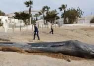 해변 고래 사체 뱃속에서 '29kg' 플라스틱 쓰레기 발견돼