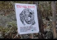 지리산 반달곰 새끼 11마리 출산…복원 목표 50마리 달성