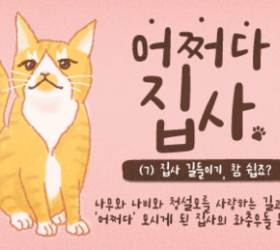 [<!HS>어쩌다<!HE> <!HS>집사<!HE>] #7. 현관 돌침대, 냉장고 전망대…고양이가 알려주는 내 집 활용법