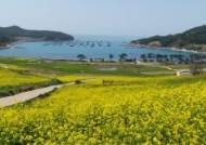 [남도 봄축제] 꽃과 바다 품은 '힐링의 섬'…청산도, 탐방객 '북적'