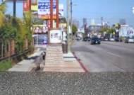 """""""군대 다녀온 한국 남자들, 총 들고 모여라"""" 26년 전 5월 LA서 일어난 일"""
