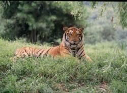 [소년중앙]호랑이·수달 같은 위기의 동물, 국내 267종 있죠