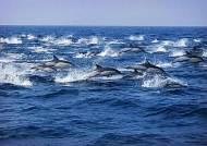 """""""푸른 동해 바다가 우리 고향이죠"""" 울산 장생포 참돌고래 2000마리"""