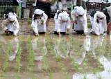 [서소문사진관]꼬마 농부들, 모내기하고 새참도 먹고~