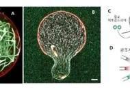 """한·미 연구진 """"스스로 광합성하는 인공세포 개발"""""""