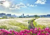 [부산<!HS>울산<!HE>경남 핫플레이스] 태화강변 국내 최대 십리대숲, 대왕암공원 아름드리 소나무숲 '손짓'