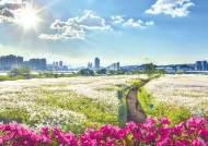 [부산울산경남 핫플레이스] 태화강변 국내 최대 십리대숲, 대왕암공원 아름드리 소나무숲 '손짓'