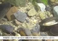 [굿모닝 내셔널]낙동강 동네 하천 민물고기 보고서