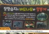 [굿모닝 내셔널]도심 생태계 보고…한강하구 '장항습지' 체험