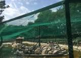 지자체 동물원 4곳, 동물 교환 추진 … 근친교배 폐해 막는다