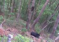 세계 최초로 '인공수정' 반달가슴곰 새끼 태어나