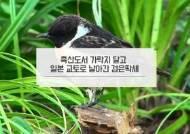 일본서 발견된 검은딱새 가락지에 'Korea'…이동경로 첫 확인