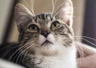 기업 성장하려면, 무심한 듯 충성하는 고양이 전략 따르라