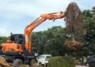 [사진] 오늘 뽑힌 '홍준표 채무제로 나무'