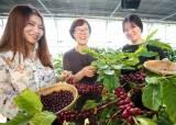 [굿모닝 내셔널]'천년 죽향(竹鄕)'도 반한 아프리카의 향기…대나무밭에 둥지 튼 '담양 커피농장' 가보니