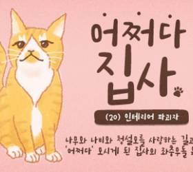 [<!HS>어쩌다<!HE> <!HS>집사<!HE>] #20. 고양이, 인테리어를 망치러 온 나의 구원자