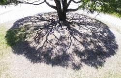 [권혁재 핸드폰사진관] 나무 그늘에서