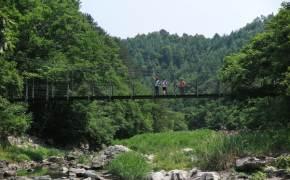 [week&] 500살 소나무 보며 걷고 계곡물 발 담그면 삼복더위도 즐겁네