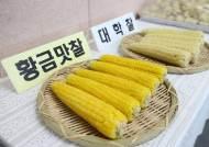 '옥수수 자부심' 괴산, '항암효과' 옥수수까지 만들었다