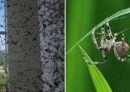 입주 1년 만에 새 아파트 뒤덮은 거미떼의 정체