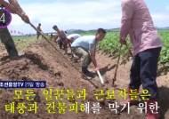 [11초 뉴스] 북한 조선중앙TV가 방송한 태풍'솔릭'에 대처하는 방법
