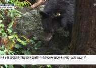 '3전4기'…그리던 김천 수도산에 보금자리 꾸민 반달곰