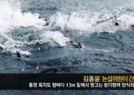 [김종윤 논설위원이 간다]욕지도 먼바다 수심 13m…참다랑어 양식의 꿈 영글다
