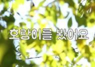[소년중앙 영상] 자연에서 뛰노는 백두산호랑이를 만났어요